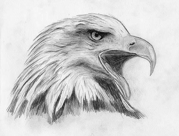 птицы рисунки карандашом - Схемы и ...: pradom.pp.ua/ptitsy-risunki-karandashom.html